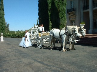 3875 horse carriage rental photo p2