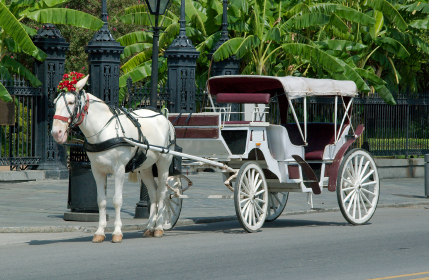 Click to request quotes: Horse Carriage Rentals (horseandcarriagephoto)-thumb