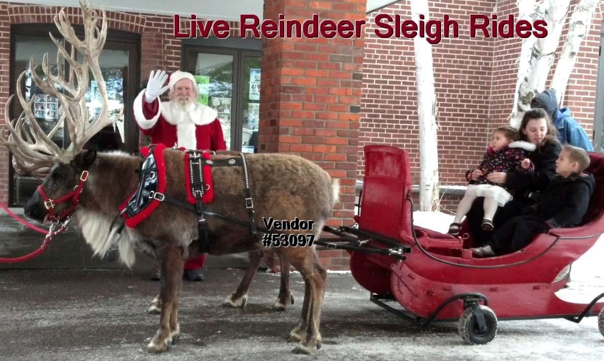 live reindeer sleigh rides 53097 Live Reindeer Sleigh Rides