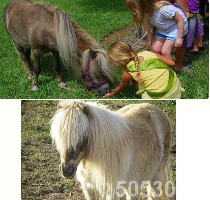 petting zoo kids miniature horses 50530