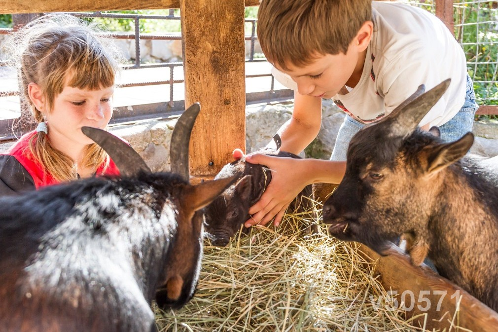 petting zoo kids with animals 50571